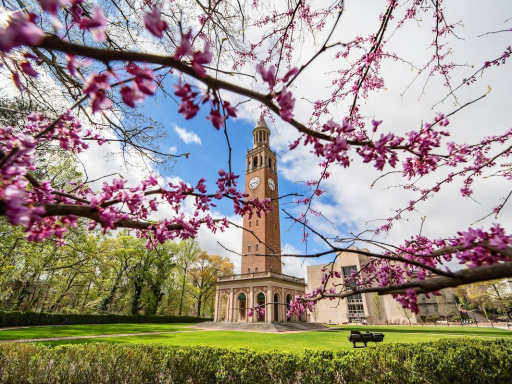 UNC-Chapel Hill campus photo with bell tower in the background and redbud tree branches in the foreground.
