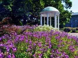 old well with purple flowers in front