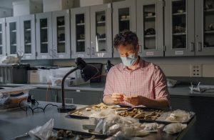 Ben Arbuckle works in lab with artifacts.