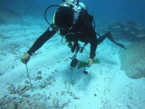 A scubadiver at the reef floor